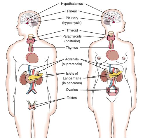 testerone hormones