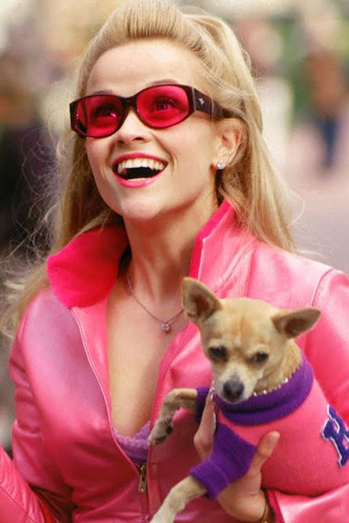 """Here's What The Cast Of """"Legally Blonde"""" Looks Like Now"""