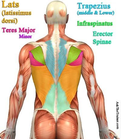 #back workout videos exercise video workouts.  #Many back routines.