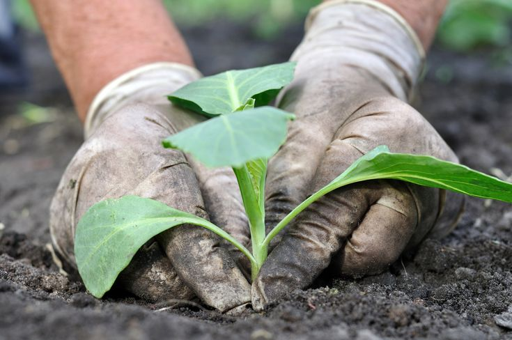 Organic Farming 2.0: How No-Till Farming Might Save Modern Agriculture