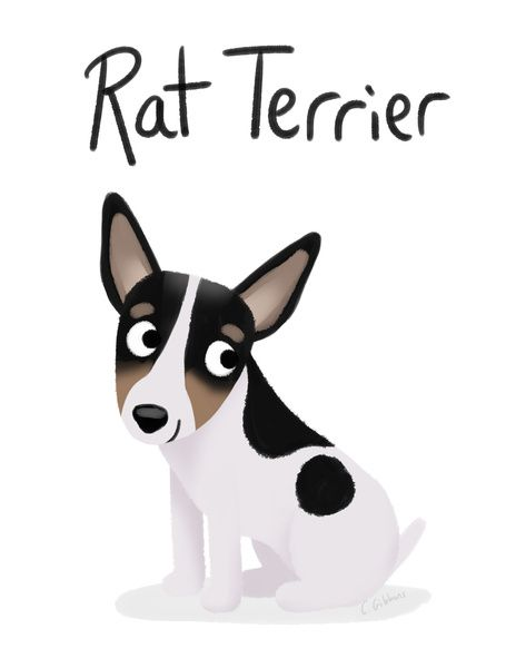 Rat Terriers ROCK <3