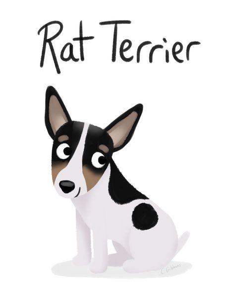 Rat Terriers ROCK <3