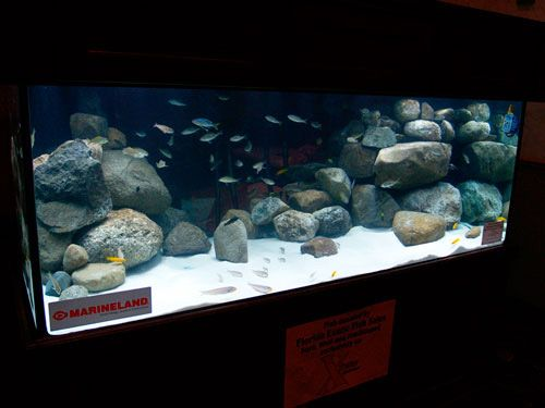 Large Aquarium Stones : Rock your world cichlid tank o ^ pinterest
