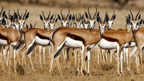 FREE SHIPPING WORLD WIDE! BUY ONE & GET ONE FREE! PURCHASE THIS PHOTO AND RECEIVE YOUR OWN PHOTO WITH FREE SHIPPING! You need to send your digital photo by email in order to get your glossy photo. Gazelle Animal - 8 inches X 12 inches size. Photos will be shipped with a thick and water-proof...