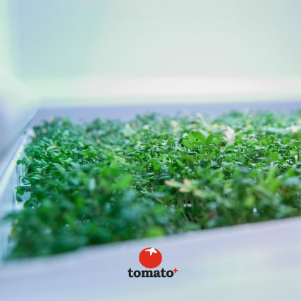 Tomato+ drawer with beautiful sprouts...