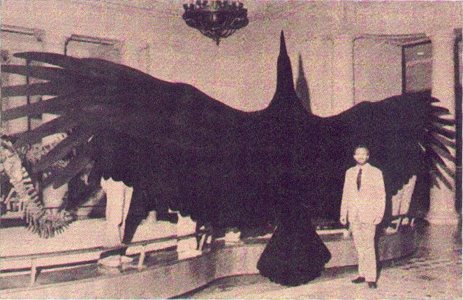 Reconstruction of the Argentavis Magnificens, the biggest & the heaviest bird capable to fly, who lived six million years ago in Argentina. Its wingspan was circa 7 m, its estimated weight 70 kg.