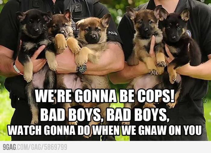 Cool German Shepherds Army Adorable Dog - 715825395467ddfb8330d6e007b7b6b4--law-enforcement-bad-boys  Perfect Image Reference_6952  .jpg
