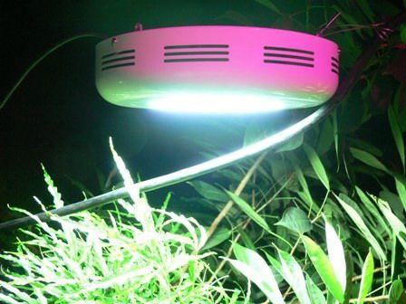 New Die UFO LED Pflanzen Lampe mit Watt und eingebauter H ngevorrichtung gibt us zum g nstigen Preis bei