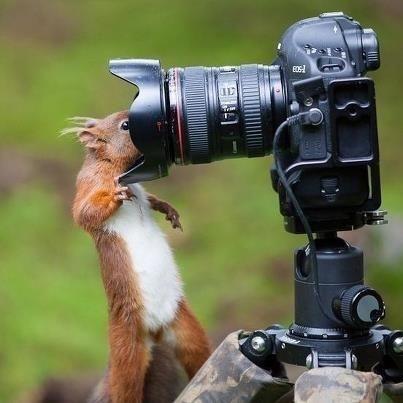 grappige eekhoorn - Google zoeken