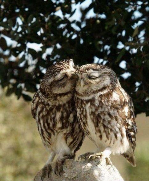 Smack...  Baci baci...  Ki kèr egy puszit?  Kiss for you.