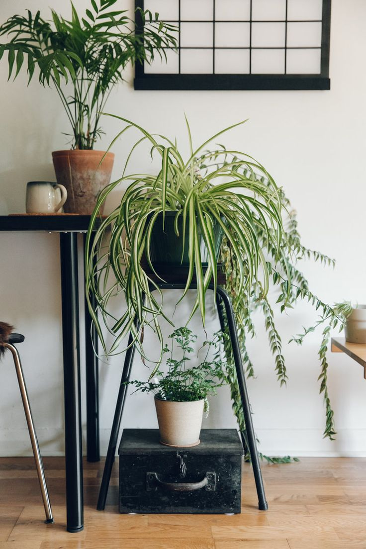 17 Best Ideas About Plant Rooms On Pinterest Plants Indoor Indoor Plant Lights And Palm House