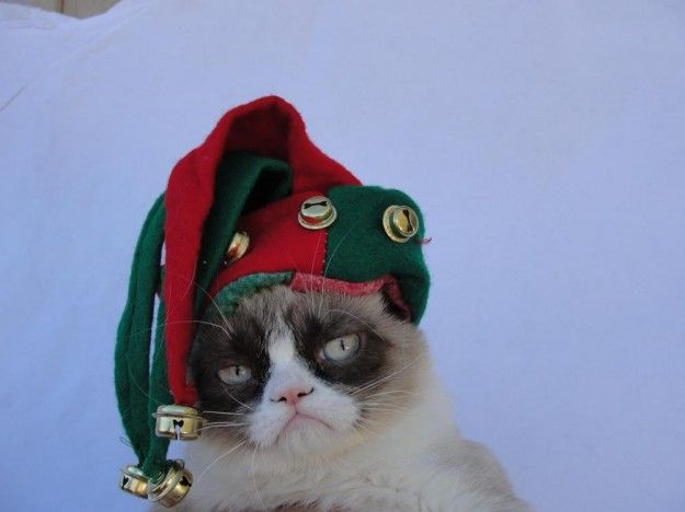 69 Best Images About Grumpy Cat At Christmas On Pinterest
