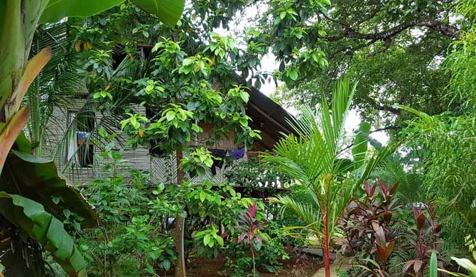 Bambu Hostel David Bambu Hostel David is your best option in David, Panama and has the best atmosphere and facilities. Bambu staff are experienced travelers, friendly and helpful. There are 4 different sleeping... #Hostel #Pan-American #Highway #Travel #Backpackers #Accommodation #Budget