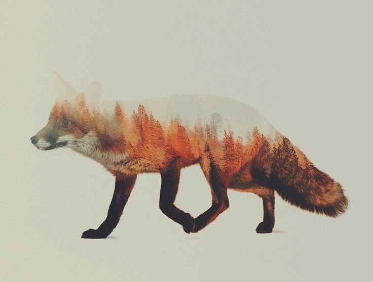 Norwegian visual artist Andreas Lie merges verdant landscapes and photographs of animals to creates subtle double exposure portraits.
