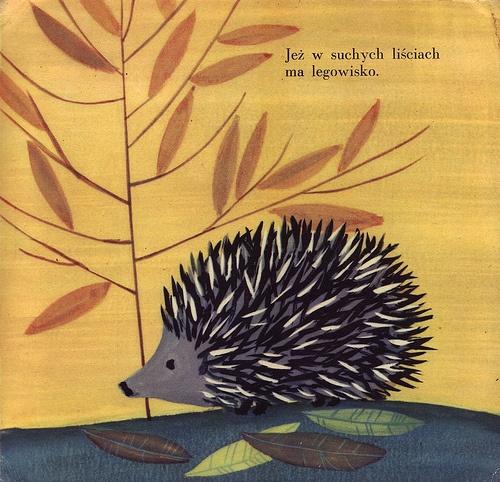 Zdzislaw Witwicki, illustration for Kto w lesie mieszka by Czeslaw Janczarski (Poland, 1958)