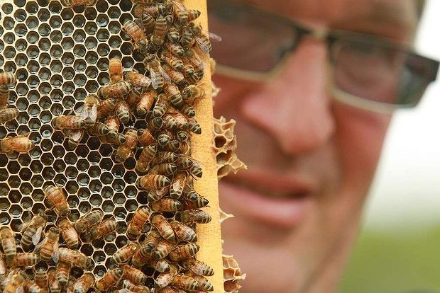 Goodfood article - Honey blending jars with purists - John Winkels of Pure Peninsula honey in Moorooduc.
