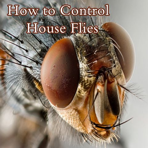 17 best ideas about fly remedies on pinterest natural fly repellant what kills fruit flies. Black Bedroom Furniture Sets. Home Design Ideas