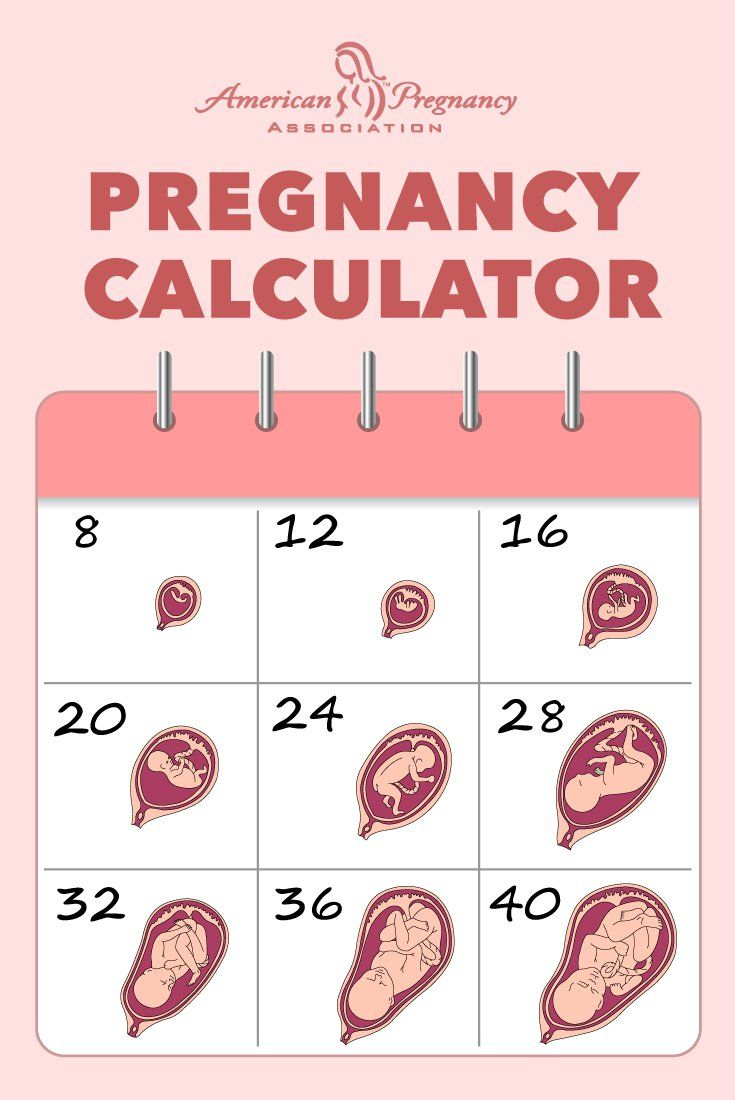 Pregnancy dating calculator