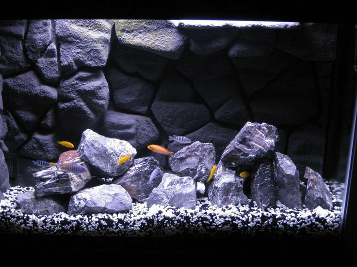My African Cichlid tank with homemade 3D background in 45 gallon tank.