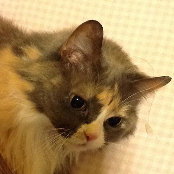 Kyra - she's so cute!