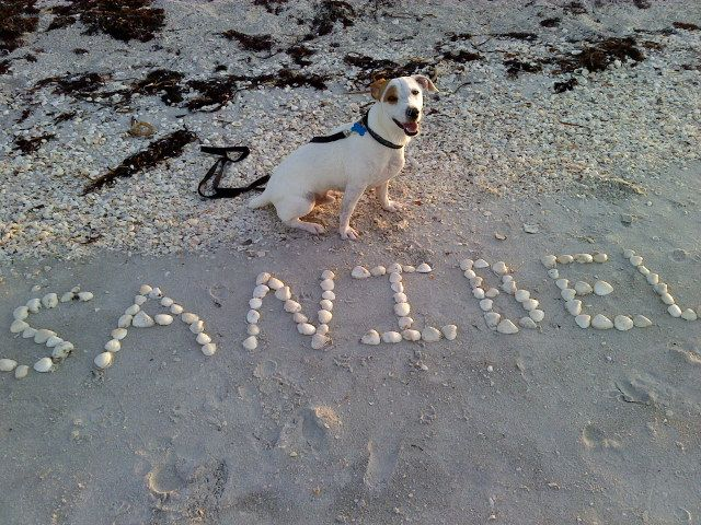 Get The Scoop On Our Favorite Pet Friendly Hotels Dog Friendly Activities And Restaurants Tha Pet Friendly Hotels Dog Friendly Vacation Dog Friends