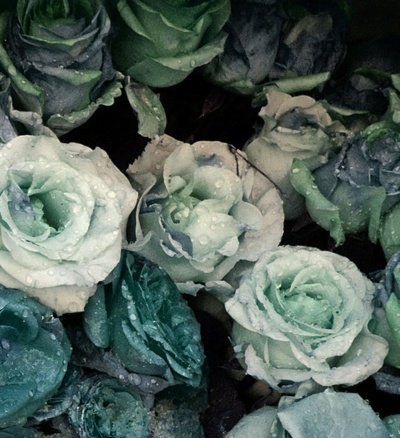 A natural, down to earth bouquet featuring greenery