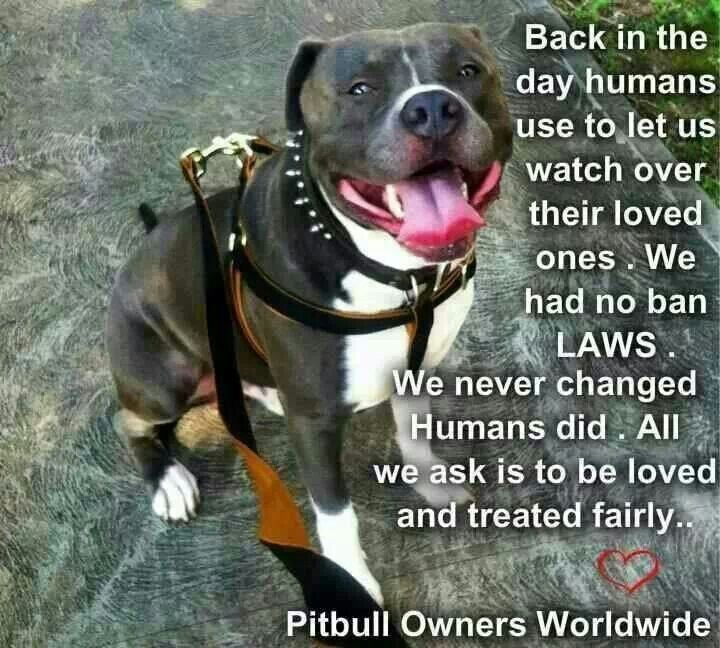 Pit bull...back in the day quote
