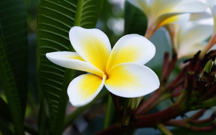 Egzotik çiçekler