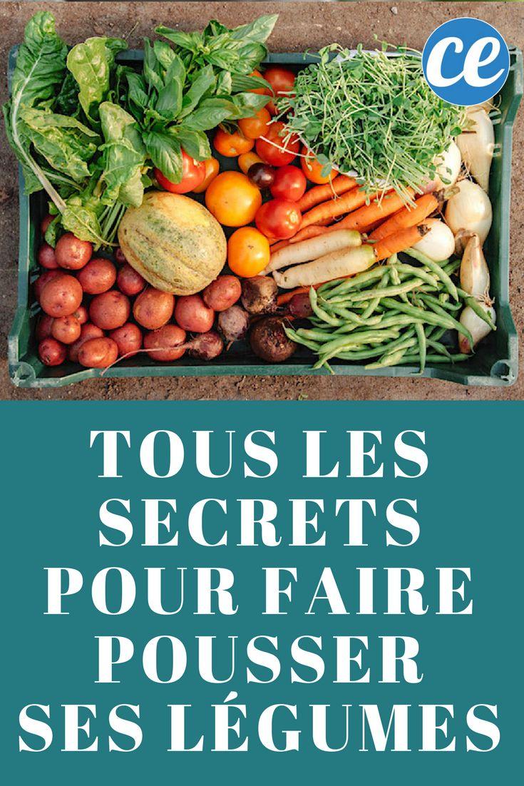 448 best plantes et jardinage images on pinterest agriculture canapes and chicken coop garden - Comment faire pousser des tomates ...
