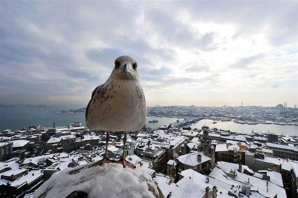 Snow in #Istanbul