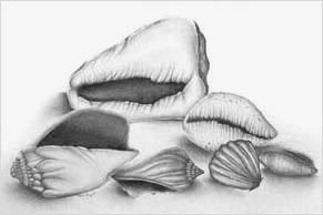 Shell drawings- grade 9