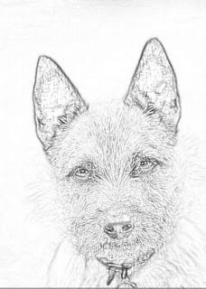 Bouton: Claire's Dog in Paris (Outlander season 2) let's start with something easy to sharpen your pencils. Outlander coloring pages: The Outlander Un-Official coloring book 2015 Holiday Edition