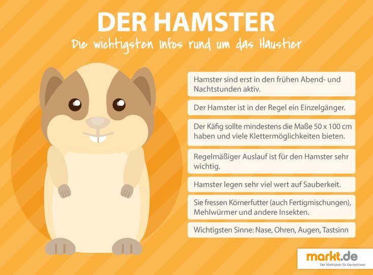 Wie sieht eine artgerechte Hamsterhaltung 🐹 aus? | markt.de #hamster #haltung #pflege #nagetier #information