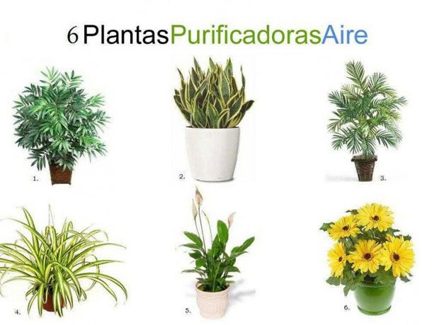 66 best ideas sustentables images on pinterest offices - Plantas para interiores ...
