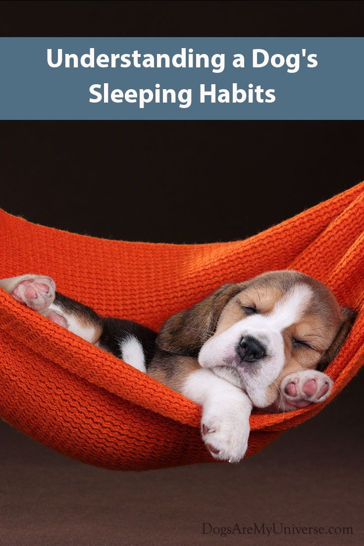 Your Dog S Sleeping Habits Cute Beagles Cute Animals Cute Dogs