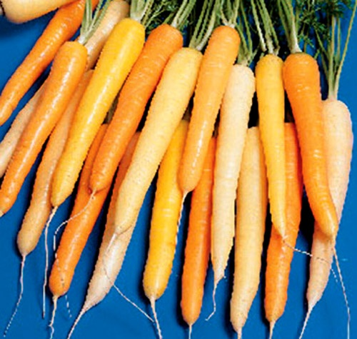 how to grow carrots at home without seeds
