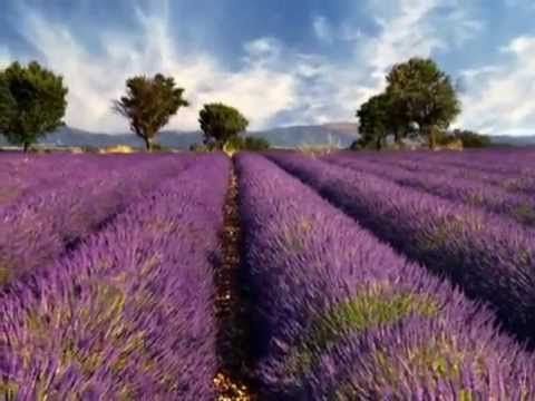 Lavender Fields and Moonlight Sonata Beethoven - YouTube