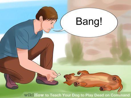 Simple Dog Training Tips Dogtraininglife 2571933499