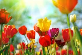 A List of Spring Flowers for Late Winter or Early Spring.