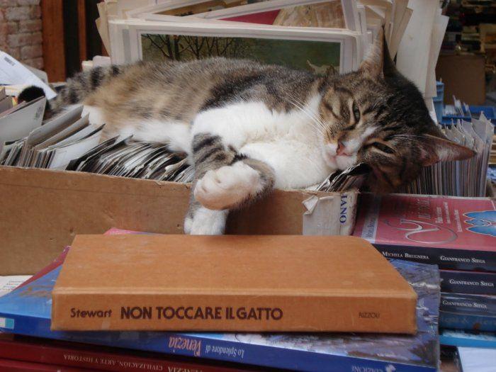 Un progetto di #educazione con gli #animali: con la #lettura i #gatti si (ri)avvicinano agli uomini