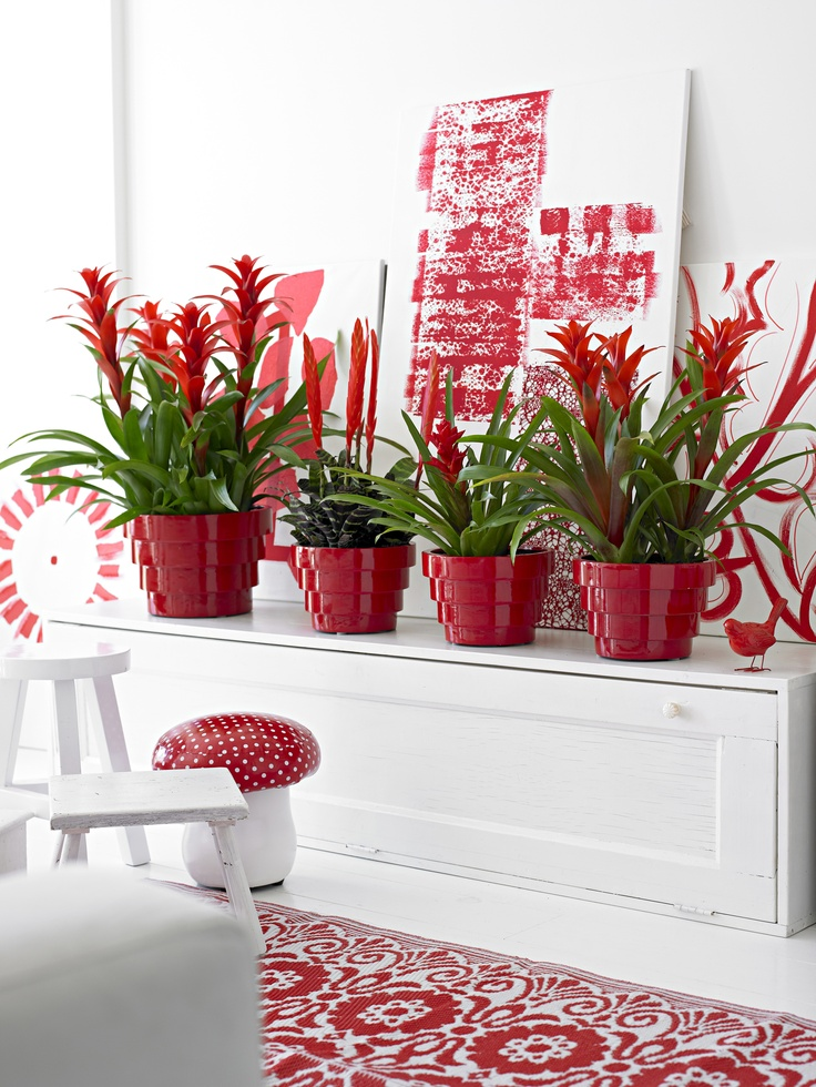 #bromeliads #red. Plant DecorArt FloralHouse ...