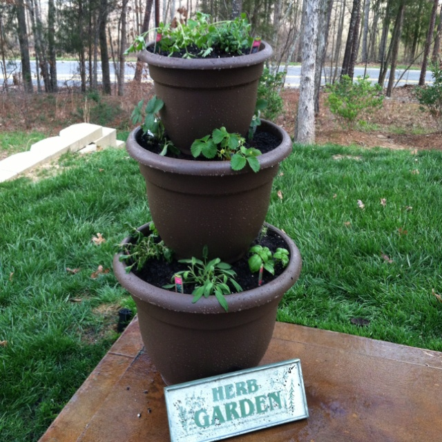 Herb garden.  I might not kill this one.....