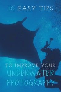 Improve Your Underwater Photography Pinterest