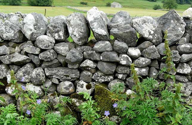 Something you can do in a weekend: build a mini stone wall. In the countryside, well-maintained dry stone walls are a marvellous habitat for wildlife. You can try to emulate this in your garden, on a smaller scale.