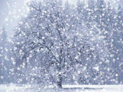 Watching snow fall.