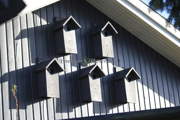 Stærekasser på vest gavlen af huset
