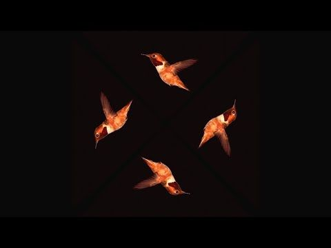 Hummingbird SloMo - Pyramid Hologram Screen Up [4K] - YouTube