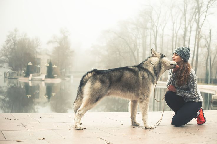 A Sitter;s Tale: Why working for Fetch! Pet Care is the best job I've ever had. - Before I decided that I wanted to be a dog walker and pet sitter for Fetch! Pet Care, I worked for an insurance startup for well over ten years. It paid th