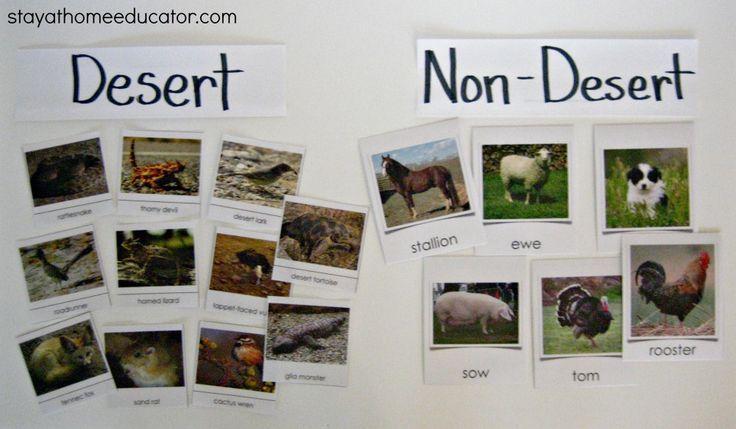 Desert Vs. Non-Desert Animal Sort & Other Desert Activities (from Stay At Home Educator)