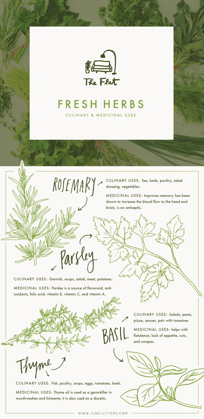 The Flat - Fresh Herbs for culinary & medicinal uses || June Letters Studio